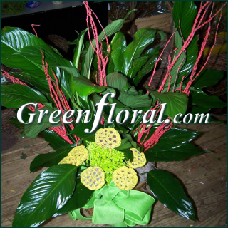 The Brenmar Peace Lily Design