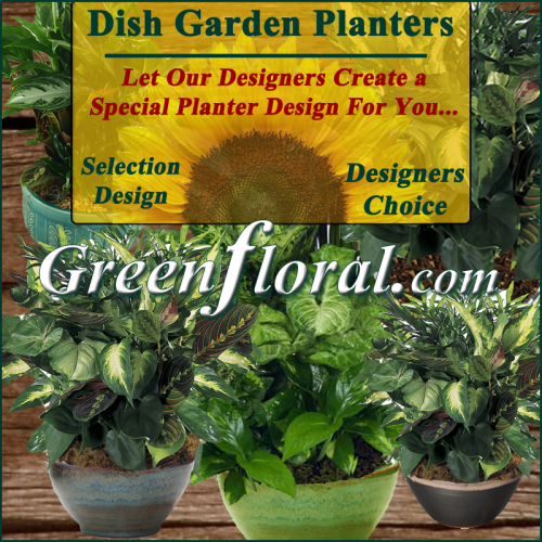 Our Designer\'s Dish Garden Planter Selection