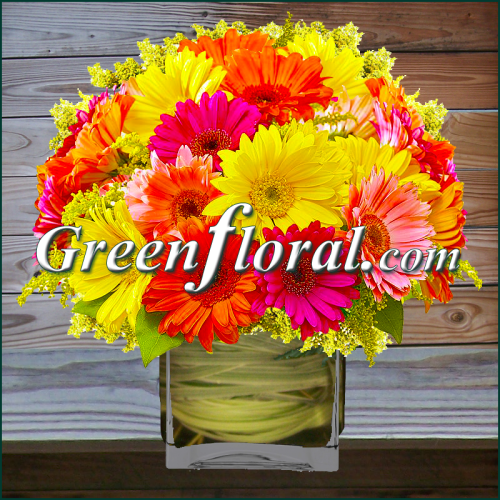 The Springrise Gerbera Cube