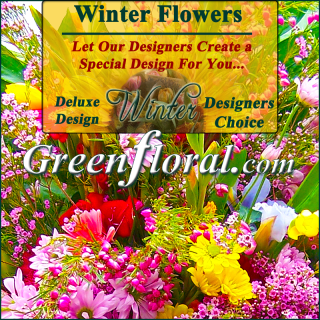 Our Designer\'s Winter Design Choice Deluxe