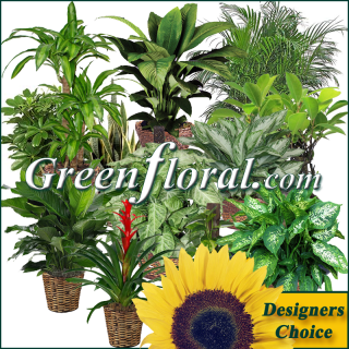 Our Designer\'s Plant Basket Selection