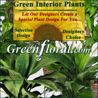 Our Designer\'s Green Interior Plant Basket Selection