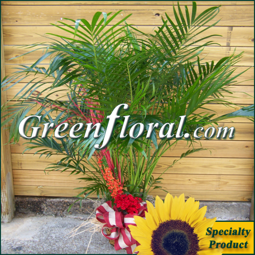 The Areca Palm Design