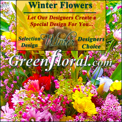 Our Designer\'s Winter Design Choice Selections Catalog