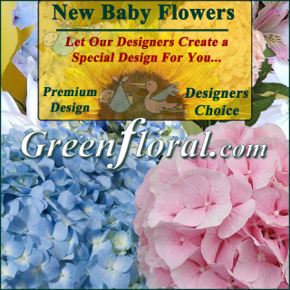 Our Designer\'s New Baby Design Choice Premium