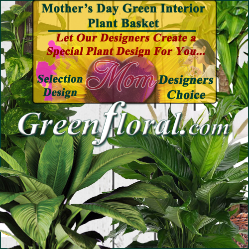 Our Designer\'s Mother\'s Day Plant Choice Selections