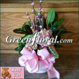 The Goodman Baby Girl Designer Planter